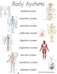 pictures on free human body systems worksheets wedding ideas