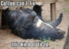 Tired Meme - coffee meme