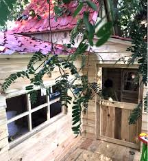 shah rukh and gauri khan gift son abram a tree house and you will