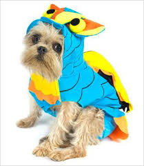 Halloween Costumes Dachshunds Dog Costumes Halloween Special Events U2013