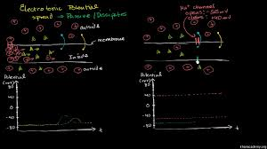 structure of the nervous system video khan academy