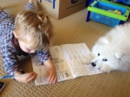 american eskimo dog new mexico the 100 most important puppy photos of all time