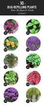256 best garden ideas images on pinterest gardening flowers and