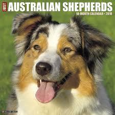 australian shepherd cost just australian shepherds 2018 wall calendar dog breed calendar