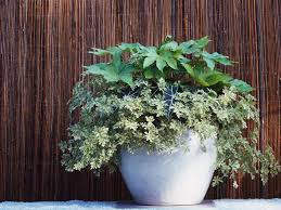 shade loving container plants hgtv