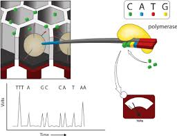 ion torrent the bead libraries derived from emulsion pcr are