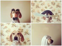 maddie goes halloween