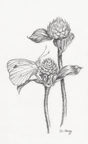 butterfly on globe amaranth by dianesheng on deviantart