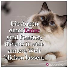 s e katzen spr che 60 best shopping inspiration images on beautiful words