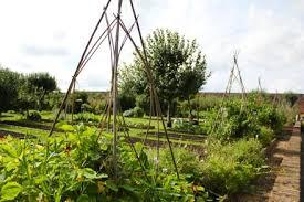babington kitchen garden my tiny plot