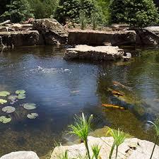 Backyard Pond Supplies by Water Garden Supplies Fish Pond Supplies The Pond Guy