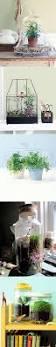 47 best terrarium ideas images on pinterest terrarium ideas