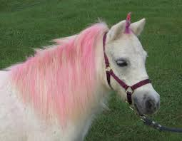 real unicorn for sale my horse forum