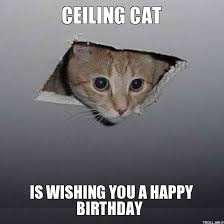 memes vault funny happy birthday meme with cats birthday memes