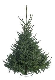 buy your christmas tree from the royal parks the royal parks