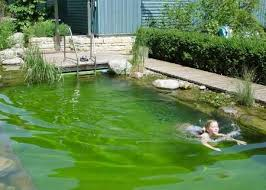 Backyard Swimming Ponds - personal swimming ponds swimming with plants and fish is eco