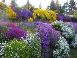 giardini rocciosi in ombra piante perenni piante da giardino piante perenni arbusti