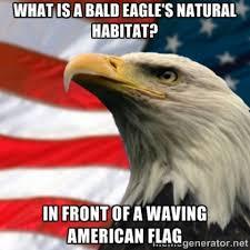Funny Eagles Memes - funniest bald eagle meme compilation america murica pinterest