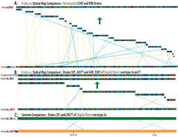 Genome Mapping Single Molecule Approach To Bacterial Genomic Comparisons Via