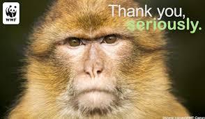 thank you ecards thank you ecards world wildlife fund