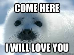 Harp Meme - come here i will love you innocent baby harp seal quickmeme