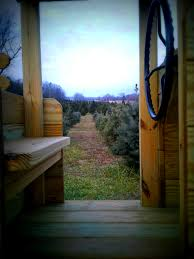 blog white dog farms choose and cut your own christmas trees