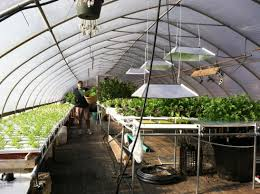 Inside Greenhouse Ideas by Amazing Indoor Greenhouse Diy Indoor Greenhouse Ideas U2013 Come