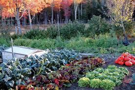 Fall Vegetable Garden Ideas Organic Garden Design Design Ideas