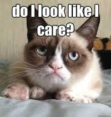 Grumpy Cat Snow Meme - 42 best grumpy cat images on pinterest grumpy cat funny kitties