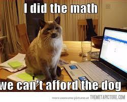 Cat Laptop Meme - funny cat dog laptop computer laugh lines