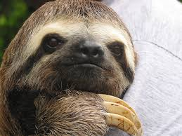 want to spend the with sloths you can in oregon that