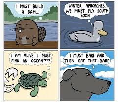 Comic Meme - comic and meme dump very punny album on imgur