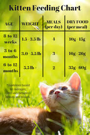essential information about feline nutrition infographic snacks