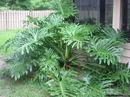 homelife 10 best plants for vertical gardens 42 best gardening philodendron images on pinterest houseplants