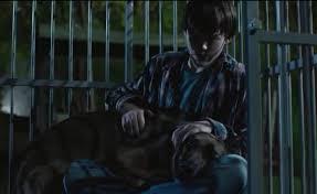 belgian malinois in movies it took five pups to play heroic veteran dog max in upcoming movie