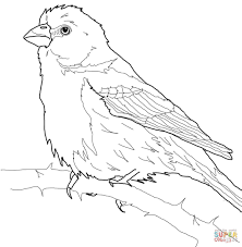 house finch coloring page free printable coloring pages