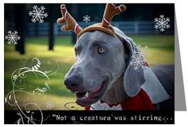 the weimaraner shop cards and decor