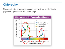 the absorption of light by photosynthetic pigments worksheet answers photosynthesis an overview ppt video online download