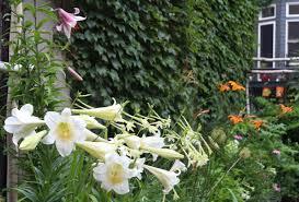 Family Garden Brooklyn Rehab Diary A Year In The Life Of A Brooklyn Garden Gardenista