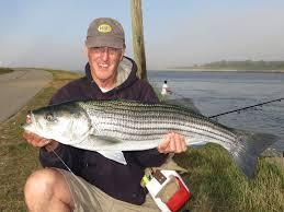 rhode island striped bass cape cod canal a different world