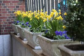 how to grow spring bulbs in containers