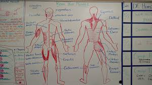 anatomy and physiology honors calendar mrs suthar u0027s site