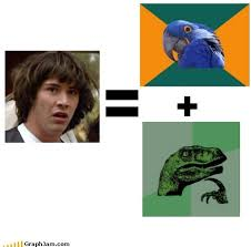 Paranoid Parrot Memes - what if i m just a combination of two other memes graphjam