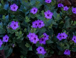 Pictures Of Beautiful Flowers In The World - flowers which bloom only at night