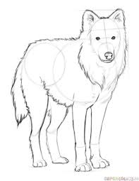 how to draw an arctic wolf step by step drawing tutorials