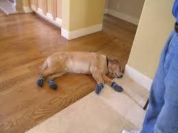 protecting hardwood floors dog booties help protect your hardwood floors from scratches yelp