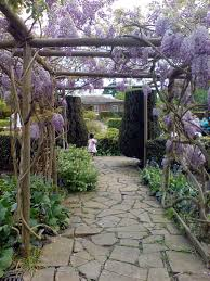 wisteria tunnel and pergola pictures popsugar home photo 4