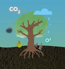 why trees are essential tree to be