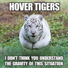 Tiger Meme - hover tigers are a real problem