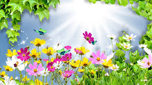 flower summer cosmos sun daisies spring